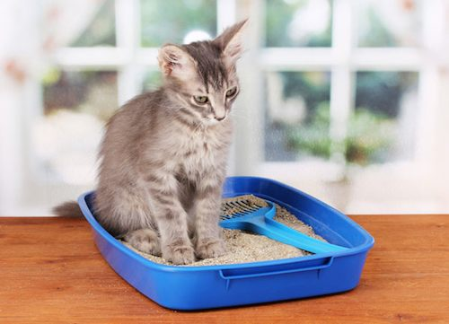 Cat Litter Printable Coupons