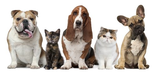 Pet Products Printable Coupon round-up