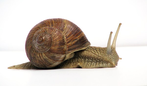 Snail Hurry Image