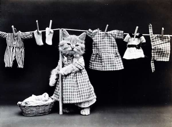 Cute Kitten Laundry Image
