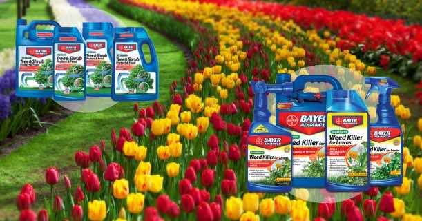 Bayer Flower Care Products Image