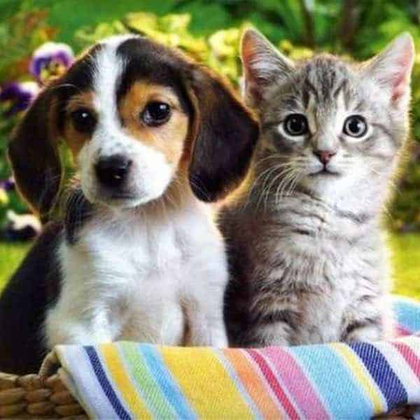 Cats & Dogs Image